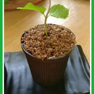 Flower Pot, How to make Flower Pot