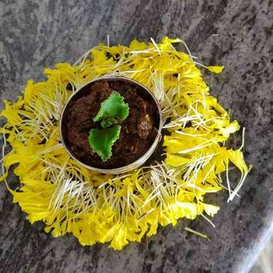 Carom seeds leaf pickle recipe in Telugu,వాము ఆకు పచ్చడి, Dimple Gullapudi